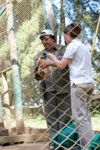 Volunteer with Animals in South America