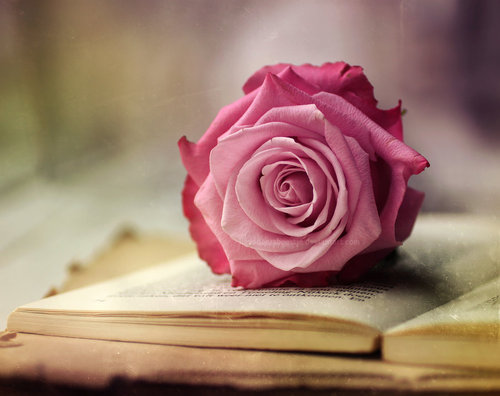 picture of a rose on a book